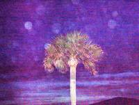 Moonlight Palm