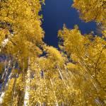 """""""Sky Light 2"""" by DavidEStarkePhotography"""