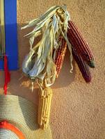 New Mexico Indian Corn