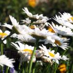 """Flowers Whitnall Park 005"" by shutterfly"