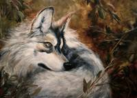 Autumn Wolf- Wildlife painting Violano