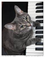 Nora The Piano Cat™ - n0008