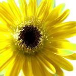 """Sunshine"" by RachaelEvans"