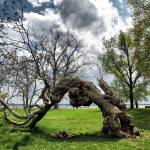 """""""Gnarly Tree"""" by onetimmay"""