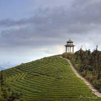 Tea Mountain: Pagoda