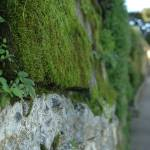 """Mossy Wall"" by melissalaree"