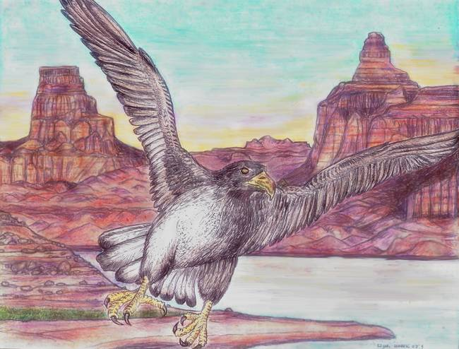 Drawing southwest artwork for sale on fine art prints for Alex cherry eagles become wall mural