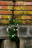 Bricks and Flowers