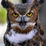 """Owl"" by michaelg"