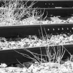 """Weeds on the tracks"" by Murfomurf"