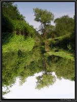 River Reflection: 2