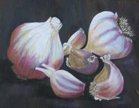 Stiffnecked Garlic