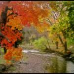 """Autumn Scene"" by SDPhotography"