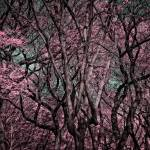 """Trees in Central Park"" by tomkinsonphoto"