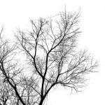 """bw-tree-against-sky"" by rick_z"