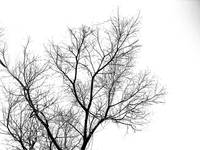 bw-tree-against-sky