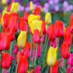 """""""Spring Time"""" by DavidZiser"""