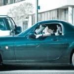"""""""Traffic Jam"""" by kozumel"""