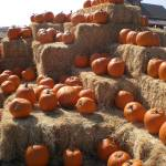 """Pumkin Patch"" by pbrb"