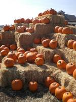 Pumkin Patch