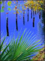 Florida Reflections