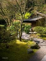 Path to Tranquility~ Japanese garden