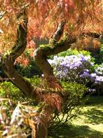Movement and Grace ~Japanese Garden