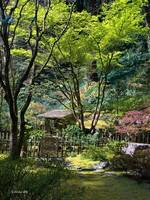 Magical ~ Japanese Garden