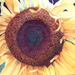"""sunflower"" by Cas"