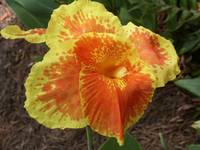 Yellow and orange flower