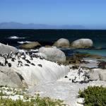"""Penguins on the Beach"" by ianbergman"