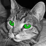 """Tabby cat in black and white but with green eyes"" by biglnet"