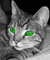 Tabby cat in black and white but with green eyes