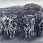 """Teamwork - Aunt Aurelia & Uncle Billy with the Ox"" by sdonley"