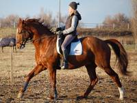 GoldenCliff dressage