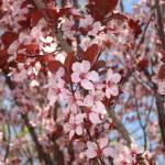 """""""pink flowers"""" by dsnrlisa"""