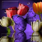 """image kind 2"" by Trish3D"