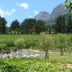 """Mont Destin Wine Estate in Franschoek"" by seema"