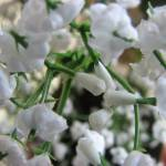 """Small white flower decoration"" by seema"