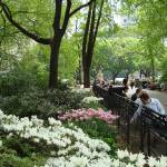 """CENTRAL PARK SPRING"" by telage"