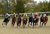 Around the Last Turn - Thoroughbred Horse Racing