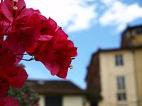 Flowers in Lucca