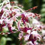 """""""ORCHIDS #2"""" by beowulf1024"""