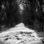 """Snowy Path"" by LeStro"