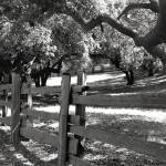 """Wooden Fence"" by vegasjunkie001"