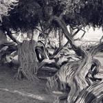 """""""Spooky Tree"""" by vegasjunkie001"""