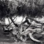 """Twisted Tree"" by vegasjunkie001"