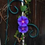 """fenceflowers"" by vegasjunkie001"