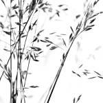 """""""Wheat Field - Zen Style"""" by ScottAnderson"""