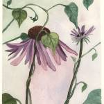 """Purple Conflower"" by knotaway"